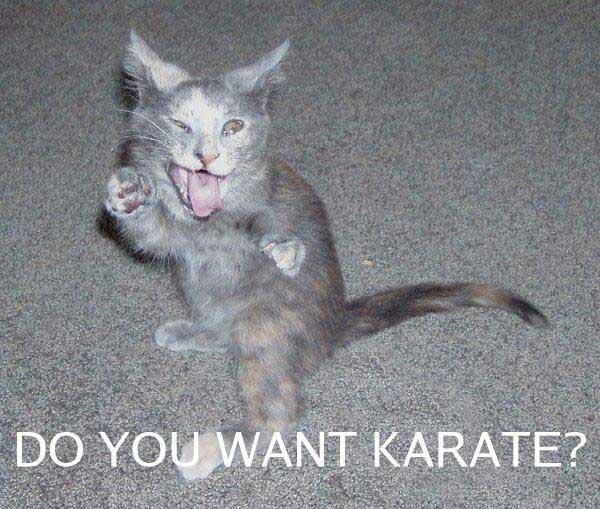 Karate-cat
