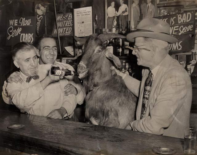 Goat_detroit